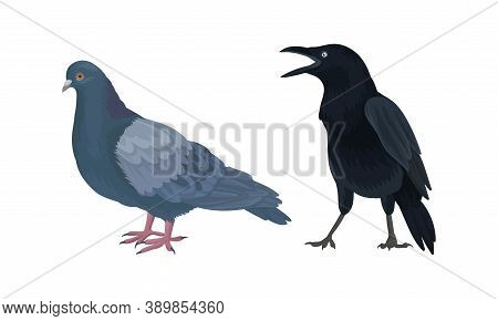 Feathered Birds Or Avian With Crow And Pigeon Vector Set