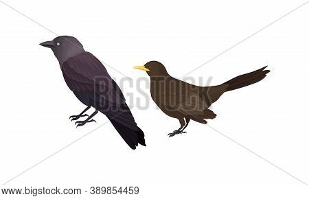 Feathered Birds Or Avian With Jackdaw Vector Set