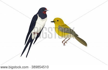 Feathered Birds Or Avian With Swallow And Oriole Vector Set