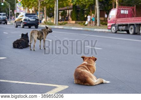 A Flock Of Stray Dogs On The Roadway On A City Street, The Problem Of Stray Animals.