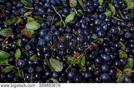 Batch Of Blueberrys Forest Gifts, Blue Background Picture