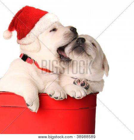 Playful Christmas santa puppies in a red container.