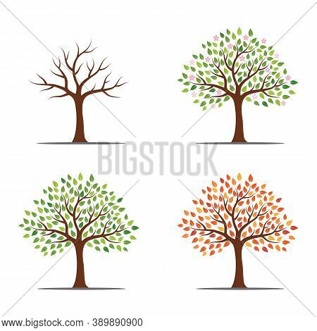 Tree In Four Seasons - Spring, Summer, Autumn, Winter. Isolated On White Background. Abstract Image.