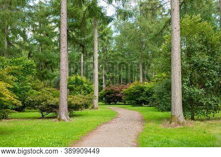 Footpath Through The Tall Trees Westonbirt Arboretum