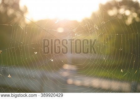 Close-up Of The Spider Web Or Cob Web With Midges And Flies On Warm Background Of Autumn Sunset