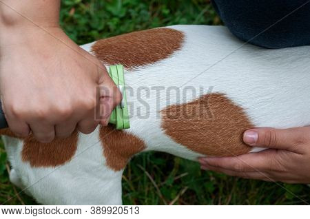 Person Combs Dog With A Metal Grooming Comb. Seasonal Molting Of Pets And Removal Of Excess Undercoa