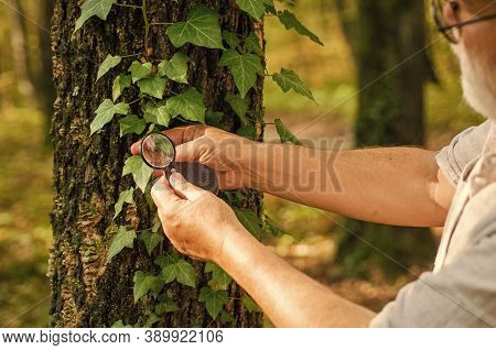 Putting Under Magnifying Glass. Round Magnifying Lens Held In Male Hands. Examining Tree Leaves With