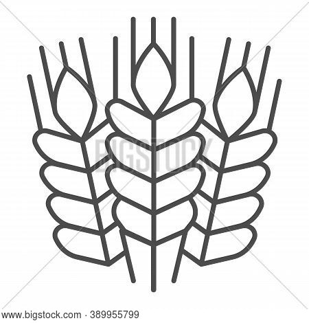 Grain Ears Thin Line Icon, Craft Beer Concept, Wheat Grains Sign On White Background, Bunches With G