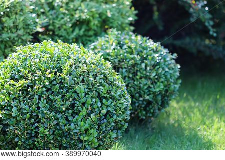 Landscaping Of A Garden With A Bright Green Lawn, Colorful Shrubs, Decorative Evergreen Plants And S