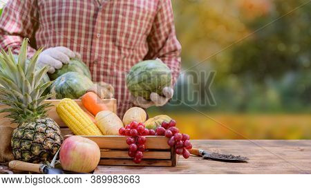 Farmer With Eco Fruit And Vegetables In Autumn. Agricultural On Harvest Cornucopia Fall Season And T