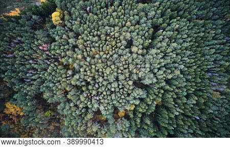 Green Forest With Colorful Trees