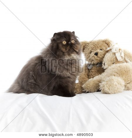 Long haired (persian) cat over a white background poster