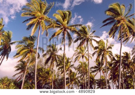Palms Swaying In The Wind