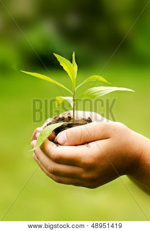 Children`s Hands Holding Young Plant Against Spring Green Background