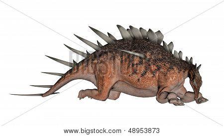Kentrosaurus dinosaur resting - 3D render