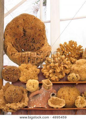 Many Sea Sponges