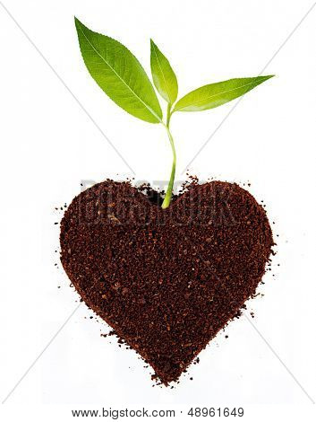 Plant tree in ground.