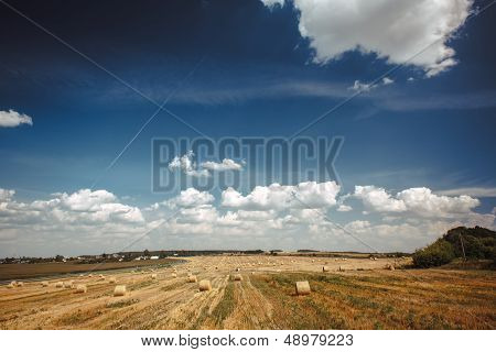 Agricultural field on which wheat has been cleaned poster