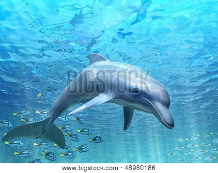 Dolphin under water poster