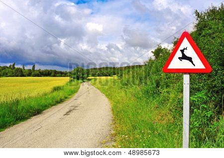 view of a rural road across a wheat field with mature spikes in the summer and a wild animals warning sign in Huesca, Spain
