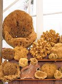Many sea sponges on display. Мarket on a small Greek island poster