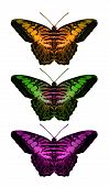 decorative graphic image from an original 14x24 illustration of colorful butterflies. poster