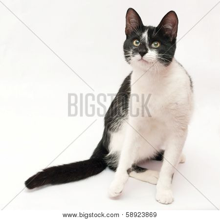 White Cat With Black Spots And Yellow Eyes Sitting, Looking Slyly
