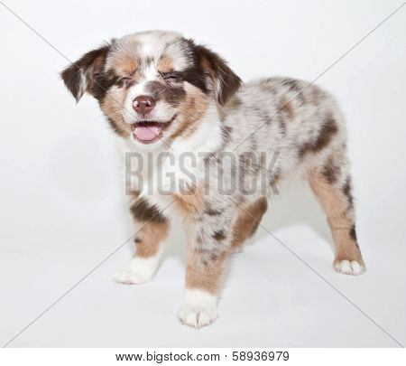 Laughing Puppy