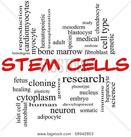 Stem Cells Word Cloud Concept In Red Caps