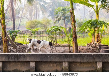 Black And White Femal Dog On Concrete Canel Wall