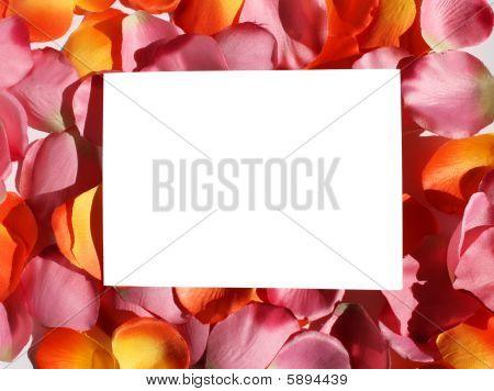 Blank Orange Pink Petals