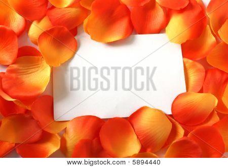 Blank Orange Petals
