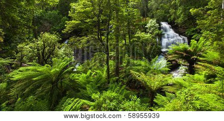 Beautiful Rainforest with Waterfall