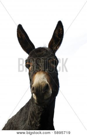 Donkey isolated from the background for general use poster