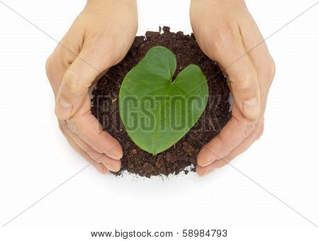 hands protect leaf