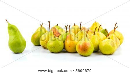 Big Green Pear - Leader Of Pears