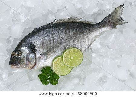 Gilthead Fish On Ice