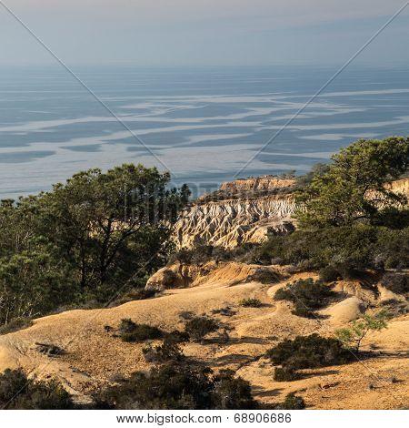 California's Torrey Pines