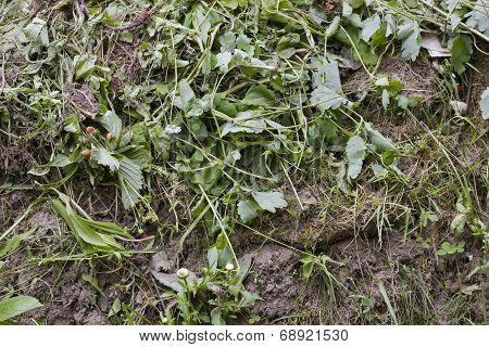 Rotten Grass  Garbage