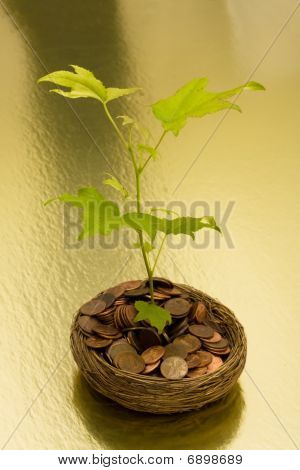 Growth In Your Savings