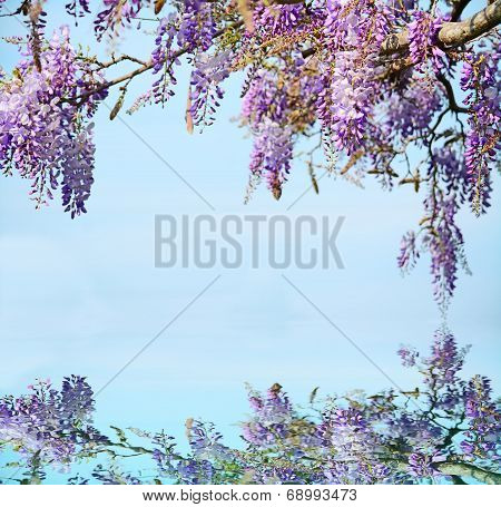 Wisteria On The Water