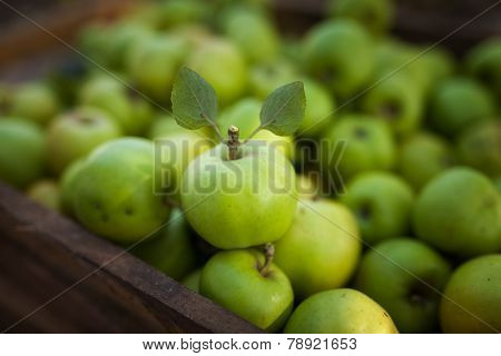 Green Apple With Leafs On Appels Background  In Box