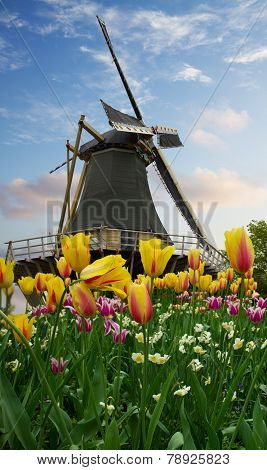 one dutch windmill over tulip flowers field in sunny day banner, Netherlands poster