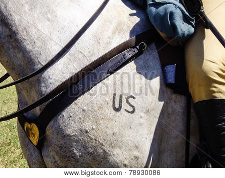 7th Us Cavalry Horse And Rider