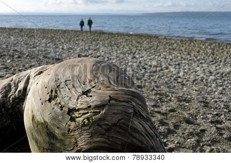 People Walking On A Beach Behind Big Piece Of Driftwood