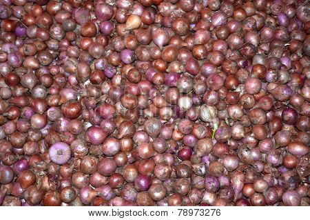 Colorful onions in a market stall in Tangalle Southern Province Sri Lanka Asia. poster