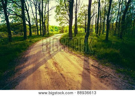 Beautiful Green Forest In Summer. Countryside Road, Path, Way, L