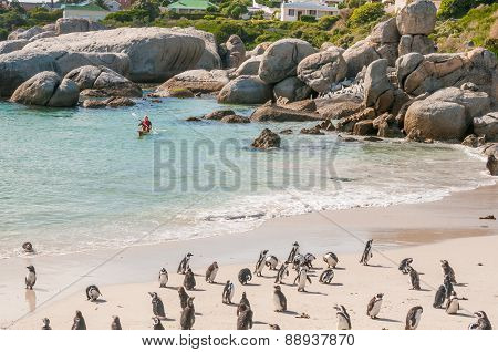 Paddling With A Canoe At Boulders Penguin Colony