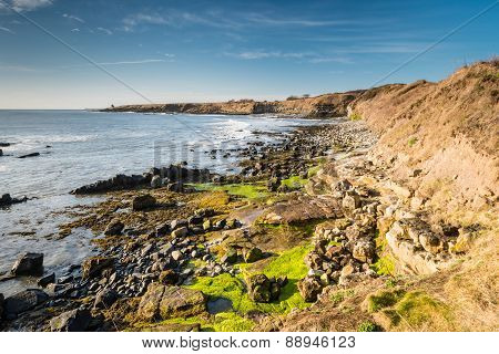 The rocky coastline near Howick in Northumberland with the Bathing House at the end of the low cliffs on the horizon poster
