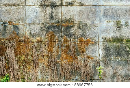 Mossy Old Wall With Fern And Roots